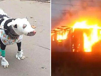 5 capa Cachorrinha gravida salva 4 pessoas de um hospital em chamas Verdadeira heroina