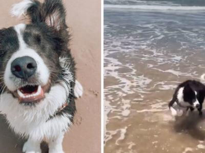 5 capa Veterinaria adota caozinho cego abandonado e o leva para conhecer a praia pela primeira vez