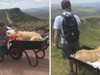 1 capa Para se despedir de seu caozinho homem o leva em carrinho de mao ate montanha preferida