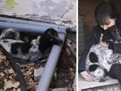 5 capa Cachorro e descartado na rua pelo antigo dono por nao conseguir mais cacar