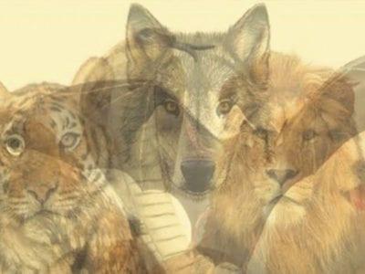 capaqual animal voce enxerga primeiro Ele te trara uma mensagem sobre a sua maior forca