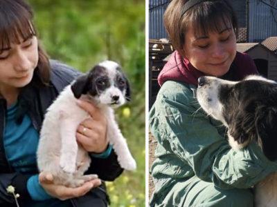 4 capa Caozinho orfao encontrado escondido em arbustos e resgatado e ganha nova familia