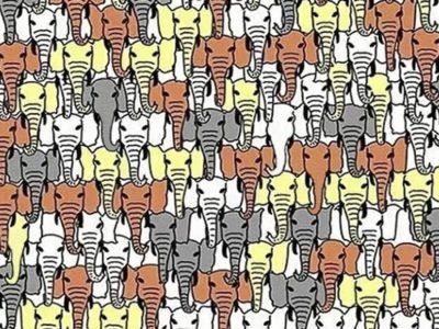 capa Em quanto tempo voce consegue encontrar o panda escondido entre os elefantes O limite e 15 segundos