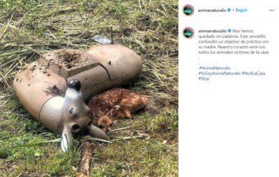 2 2 Filhotinho de cervo orfao confunde boneco de tiro ao alvo com sua mae e emociona