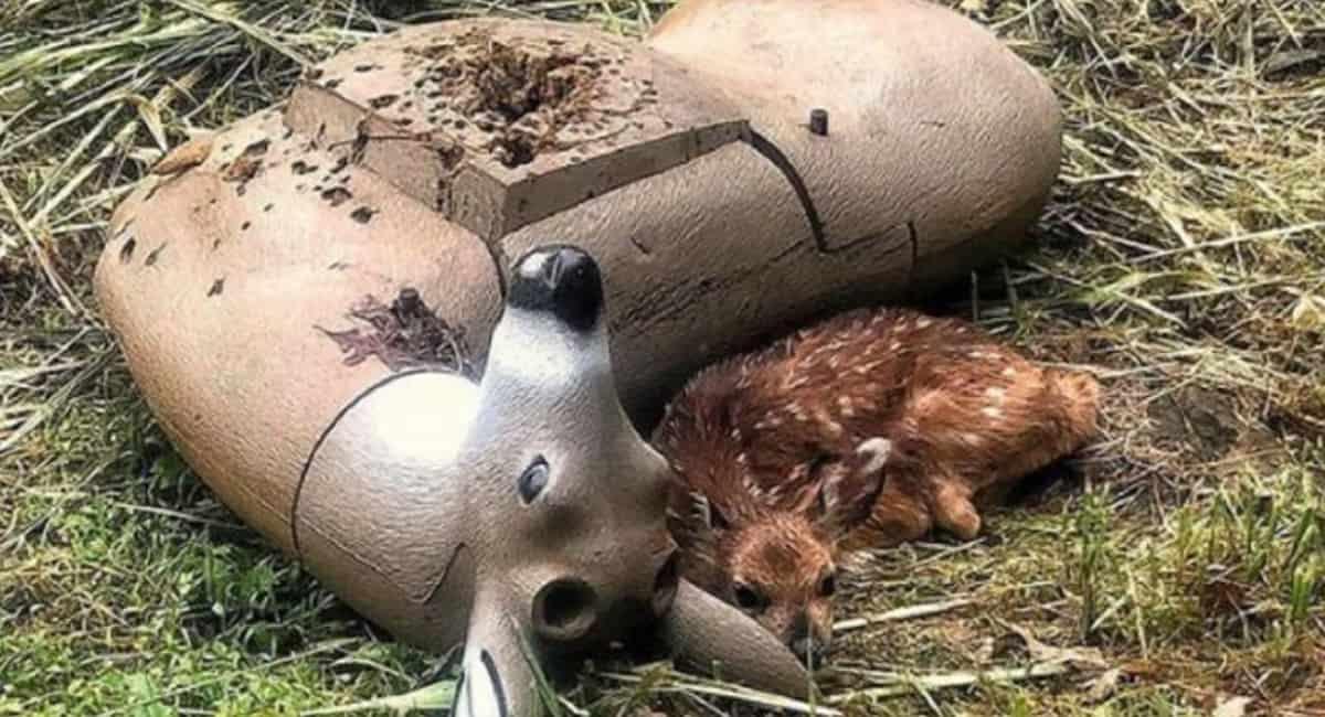 2 capa Filhotinho de cervo orfao confunde boneco de tiro ao alvo com sua mae e emociona