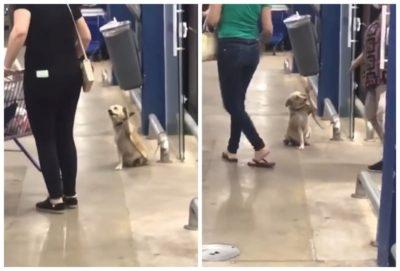 montagem cachorro 2