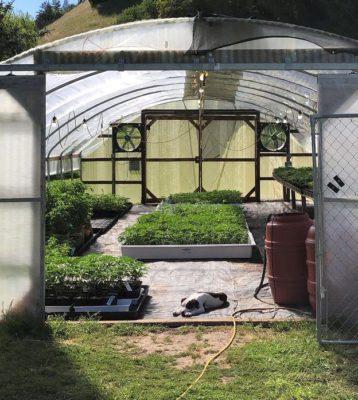 2 5 Filho de Kadu Moliterno publica foto trabalhando em plantacao de maconha na California