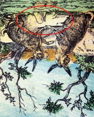 5 2 Os coelhos estao em perigo Encontre o cao escondido na imagem em ate 15 segundos
