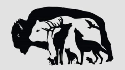 5 capa As pessoas que encontram os 13 animais possuem uma inteligencia superior a da maioria