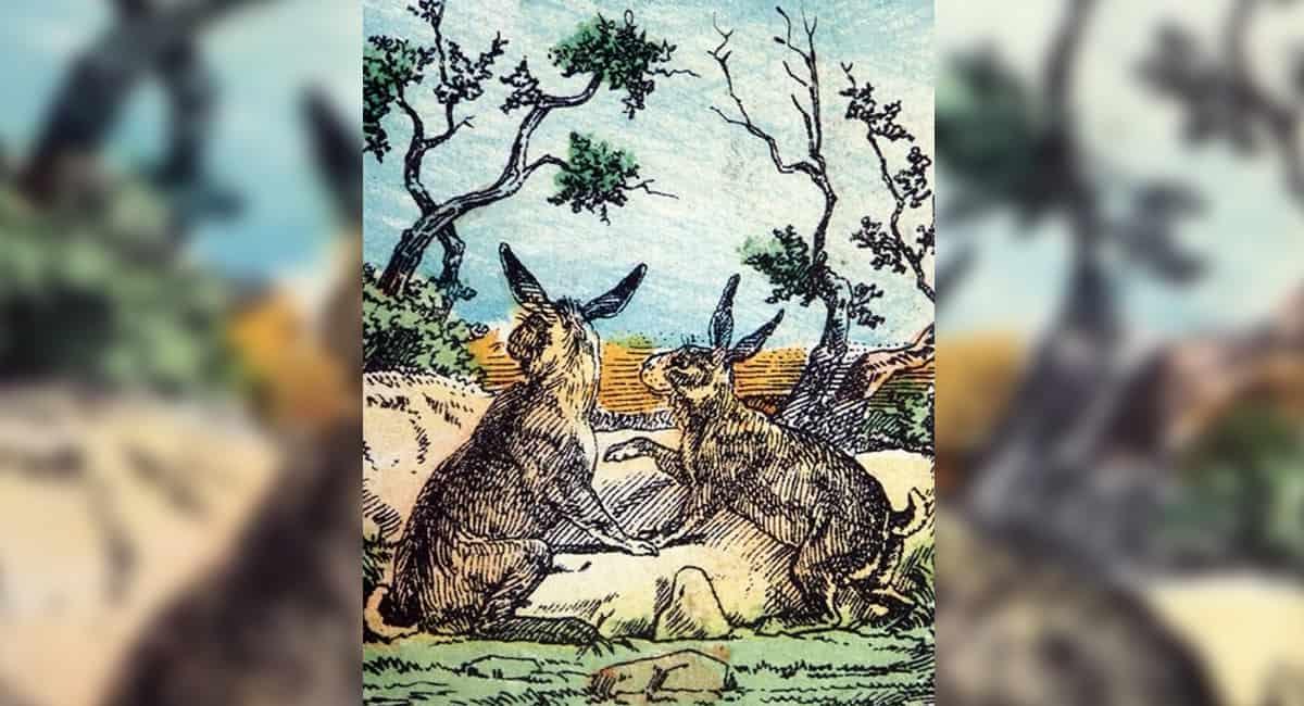5 capa Os coelhos estao em perigo Encontre o cao escondido na imagem em ate 15 segundos