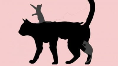 5 capa Voce e uma pessoa imatura A quantidade de gatos que enxergar te ajuda a descobrir