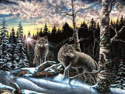 Capa Quantos lobos voce consegue encontrar em 8 segundos