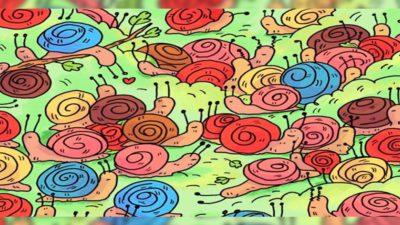 capaenigma viral encontre a rosa camuflada entre os caracois