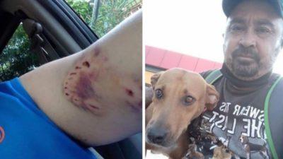 capame mordeu e eu paguei com amor homem ganha confianca de cadela traumatizada e a alimenta todo dia